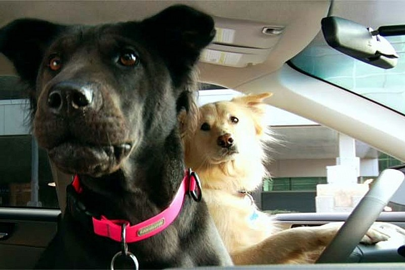 Subaru to Introduce Dog Driving Lessons for 2010 [Videos]
