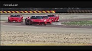 Four Ferrari thoroughbreds for a special driver